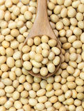 Soya beans Royalty Free Stock Images