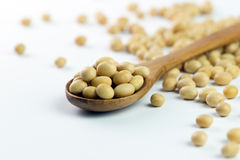Soya beans. Close-up of soya beans on wooden spoon over white background Stock Photography