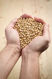 Soya beans in hands Stock Photo