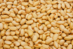 Soya beans soaked in water. Royalty Free Stock Image