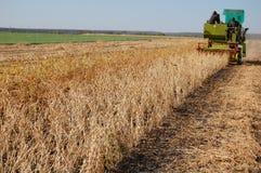 Soya harvesting. By small combain Stock Image