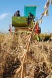 Soya harvesting. By small combain Royalty Free Stock Photos