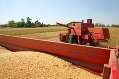 Soya harvesting Stock Images