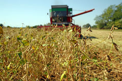 Soya harvesting Royalty Free Stock Photos