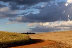 Soya pole prawie przygotowywający zbierającym już zbierającym w Grande i inny robią Sul, Brazylia zdjęcie royalty free