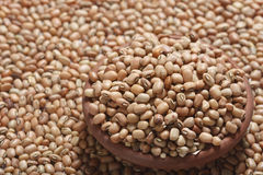 Soyabean - a legume often used like vegetable. Soyabean - The soybean (U.S.) or soya bean (UK) (Glycine max) is a species of legume native to East Asia Stock Images