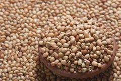 Soyabean - uma leguminosa usada frequentemente como o vegetal. Imagens de Stock