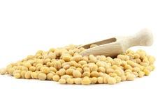 soyabohnen stockbild