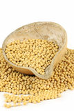 Soybean Royalty Free Stock Image