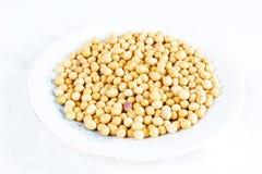 soybean royaltyfri foto