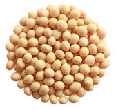 Soybean Stock Photo