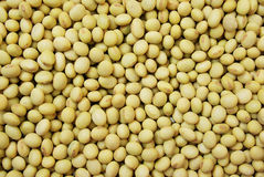 The Soybean Stock Images