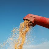 Soybean. Grain auger of combine pouring soy bean Stock Image
