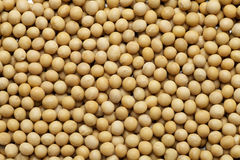 Soybean. Chinese soybean close-up background Stock Images