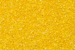 soybean Imagem de Stock Royalty Free