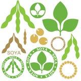 soybean Imagens de Stock Royalty Free