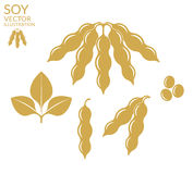 soybean royaltyfri illustrationer