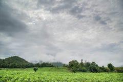 soybean Royaltyfri Fotografi