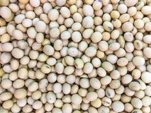 Soybean on background Royalty Free Stock Images