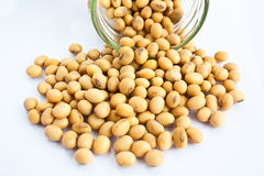 Soybean in bottle Royalty Free Stock Image