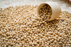 Soybean Royalty Free Stock Photography
