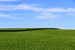 Soybean and corn cultivation in the south of Brazil. Beautiful green fields growing side by side with blue sky as a background. Agriculture generating money Stock Photography