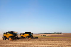 Soybean crop being harvested by combines. Stock Image