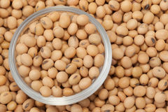 Soybean Stock Image