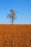 Soybean field Stock Photos