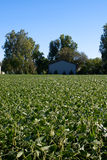 Soybean Field and Barn Stock Photos