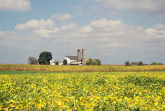Soybean Field in Late Summer stock photos