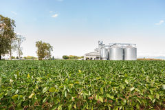 Soybean field in a sunny day Stock Photography