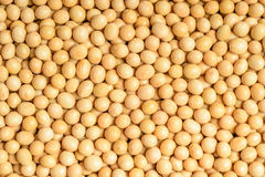 Soybean. Food background of soybean, tilt shift lens royalty free stock photo