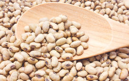 Soybean fried with wooden spoon. Close-up image of raw soy bean on wooden spoon Royalty Free Stock Photo