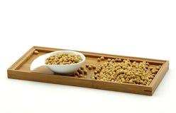 Soybean (glycine max) Royalty Free Stock Photo