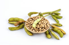 Soybean (Glycine max (L.) Merrill). Grains that are beneficial to the body royalty free stock photo