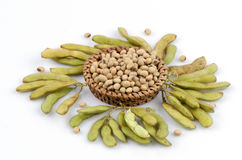Soybean (Glycine max (L.) Merrill). Grains that are beneficial to the body stock images