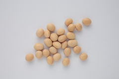 Soybean, Glycine max Royalty Free Stock Photo