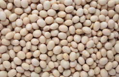 Soybean, Glycine max Royalty Free Stock Image