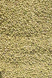 Soybean on the ground. Drying soybean on the ground Stock Image