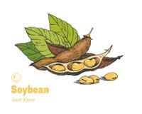 Soybean hand drawn illustration setn Royalty Free Stock Image