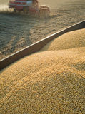 Soybean Harvest Royalty Free Stock Photo