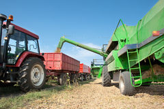 Soybean Harvest Stock Photography