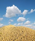 Soybean harvest. Heap of soy bean after harvest, selective focus Royalty Free Stock Images