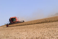 Soybean  harvest Stock Photo