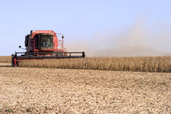 Soybean harvest. Combine harvester working in a soybean field stock images
