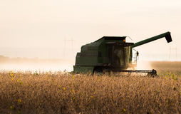 Soybean harvest in autumn. Harvesting of soybean field with combine royalty free stock images