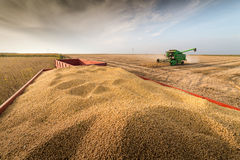 Soybean harvest in autumn royalty free stock photography