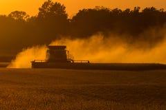 Soybean Harvest Royalty Free Stock Photos