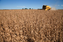 Soybean harvest. Stock Images